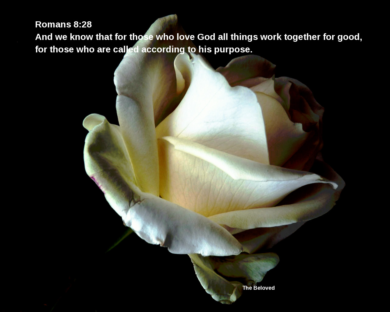 Romans828Beloved