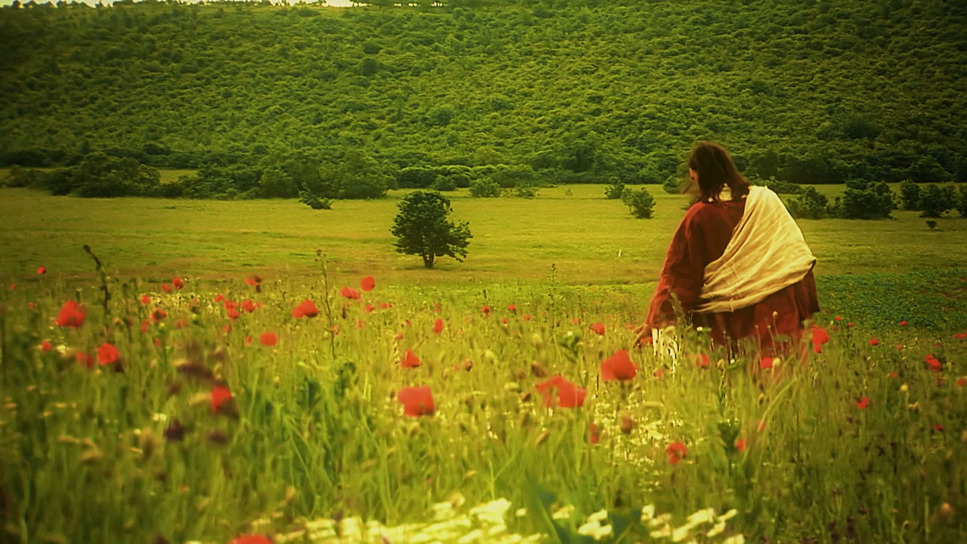 videoblocks-jesus-as-seen-from-behind-walking-alone-through-poppy-field-long-shot_hgqoeaeom_thumbnail-full01